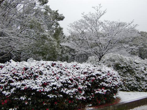 雪化粧の大阪城02