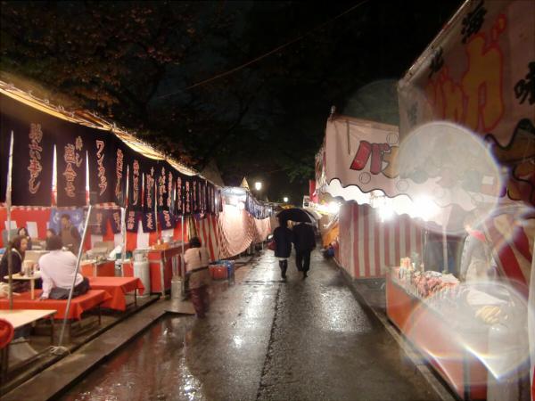 造幣局の夜桜写真6