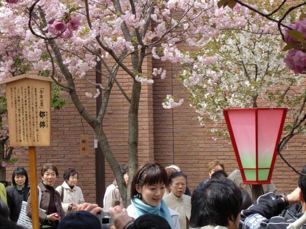造幣局桜の通り抜けの写真1-6