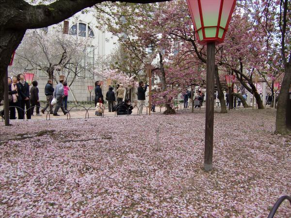 造幣局桜の通り抜けの写真2-5