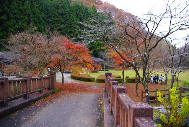 101128冬桜10