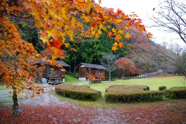 101128冬桜11