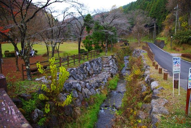 101128冬桜09