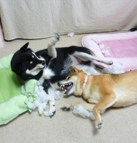 10 09 15  犬パンチ