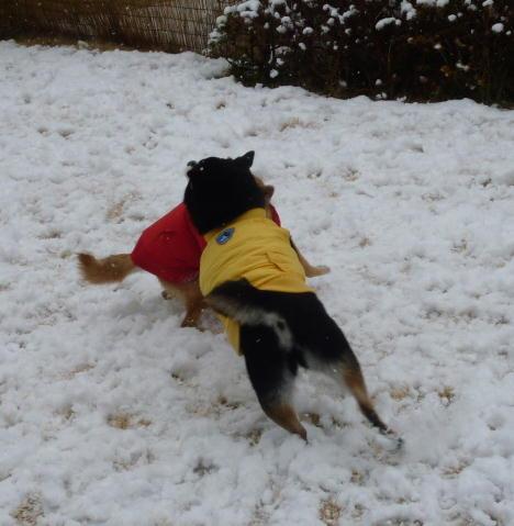 11 02 11  また雪~