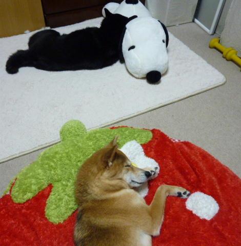シロちゃん枕