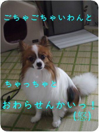 DSCF2294.jpg