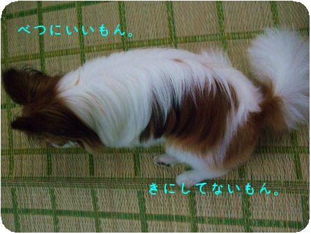 DSCF2381.jpg