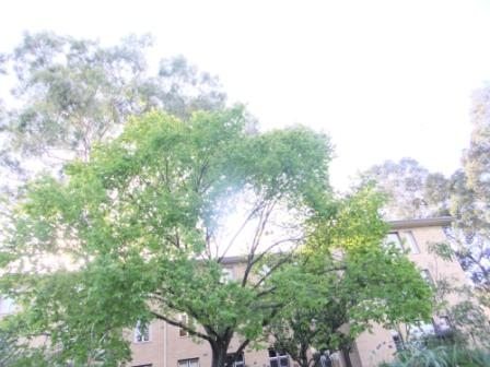 2012_01160019.jpg