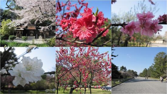 s-2011-04-13 二条城と京都御苑5