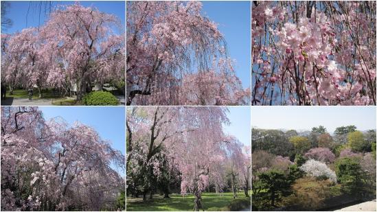s-2011-04-13 二条城と京都御苑3