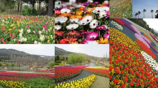 s-2011-04-16 花さじきと淡路島公園3