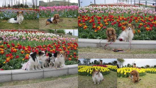 s-2011-04-16 花さじきと淡路島公園4