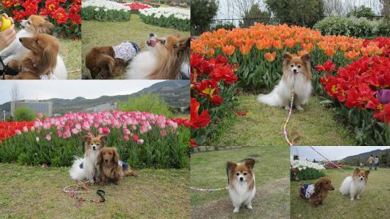 s-2011-04-16 花さじきと淡路島公園5