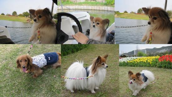 s-2011-04-16 花さじきと淡路島公園8