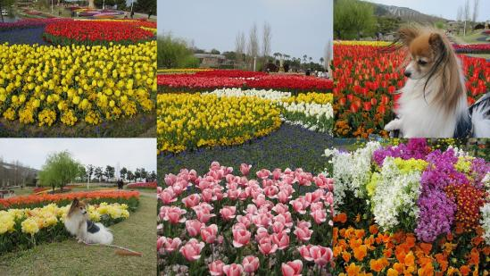 s-2011-04-16 花さじきと淡路島公園7