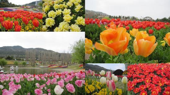 s-2011-04-16 花さじきと淡路島公園6