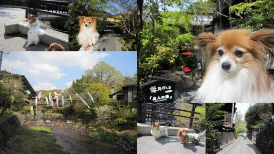 s-2011-04-28 大分熊本5