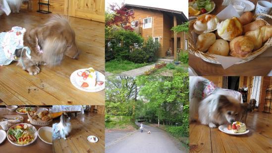 s-2011-05-16 世羅と大山3