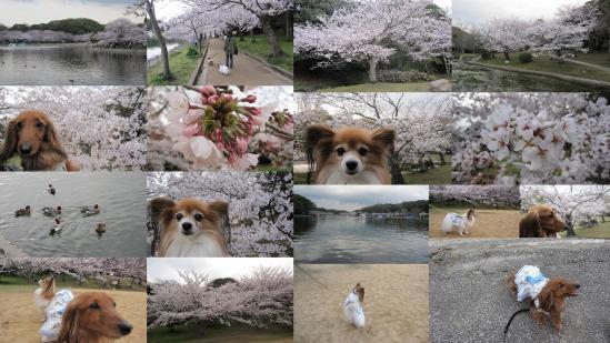 s-2011-04-09n.jpg