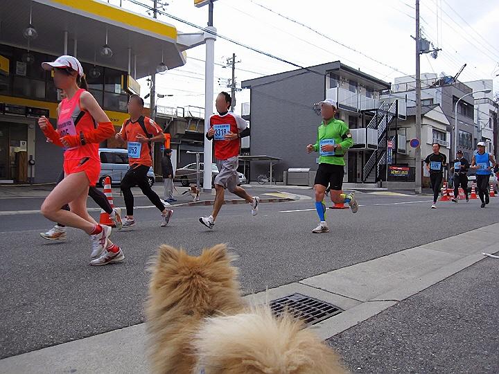神戸女子ハーフマラソン大会&打ち上げ大会。