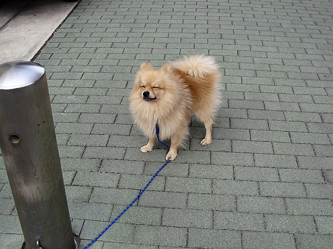 久々に愛犬マール登場(^u^)