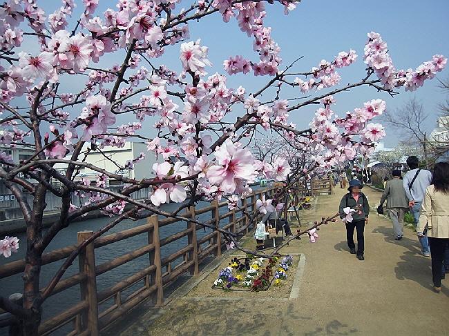 一足早いお花見ツアーに行ってきました。(*^_^*)
