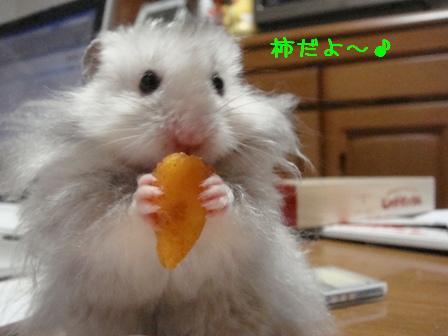 柿だよ~♪