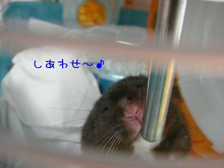 しあわせ~♪