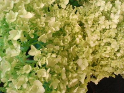 greenanaberu.jpg