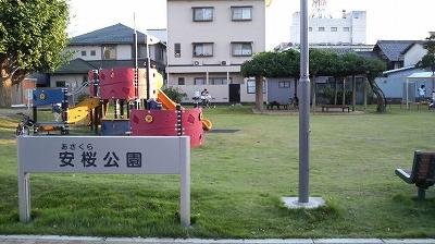 sasakura01.jpg