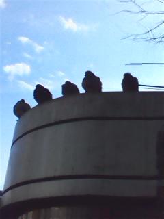 20091222194651