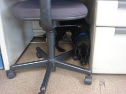 机の下もぐる