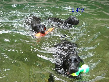 ボク初泳ぎ