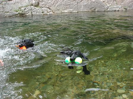 ボク初泳ぎ2