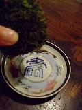 2010_0529三日月豆0017