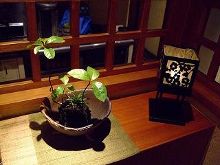 2010_0705三日月豆0023