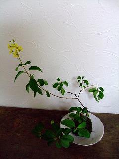 2010_0930三日月豆0020