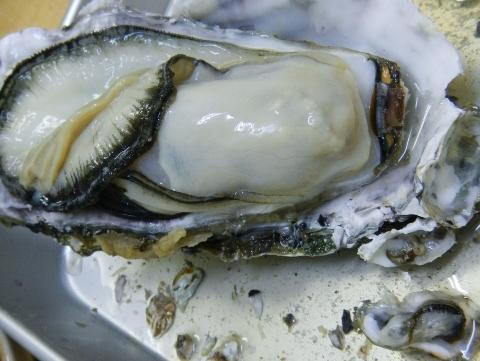 牡蠣はやっぱり美味しい
