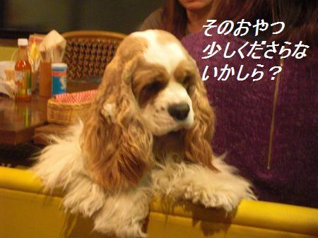 050_convert_20110329230544.jpg