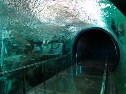 下関 水族館 海響館