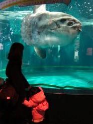 しものせき水族館