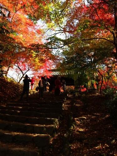 秋月城跡 紅葉