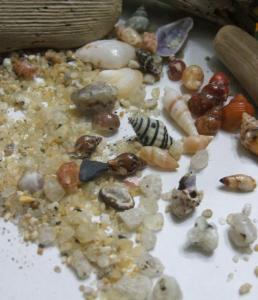屋久島の砂