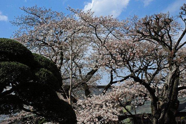 1真覚寺120409-006