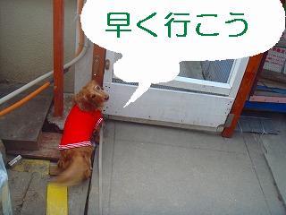 komugi 3365