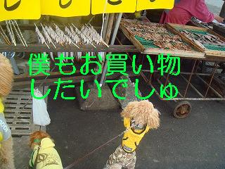 komugi 3382