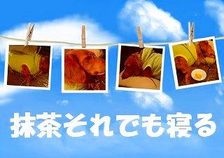 decojiro-20091203-074750.jpg
