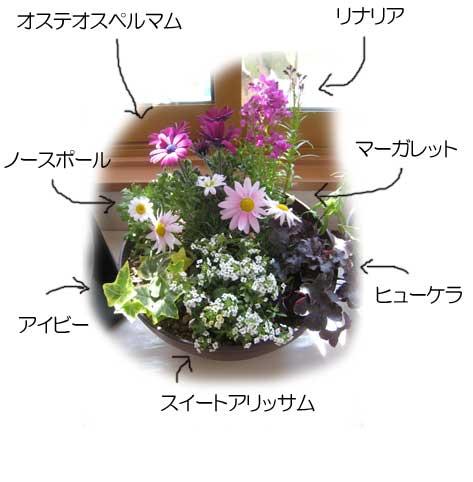 寄せ植え花名前