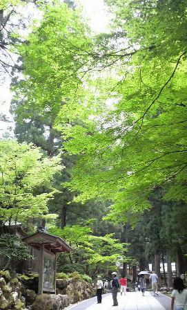 永平寺 緑